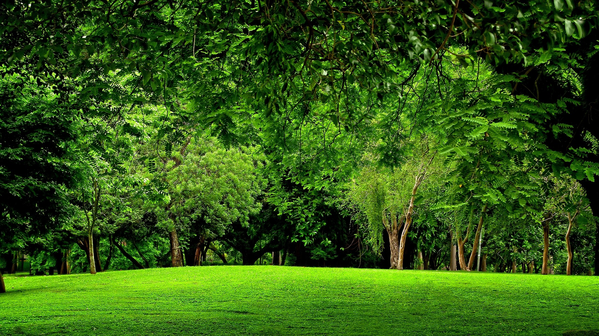 Free Green Forest Background