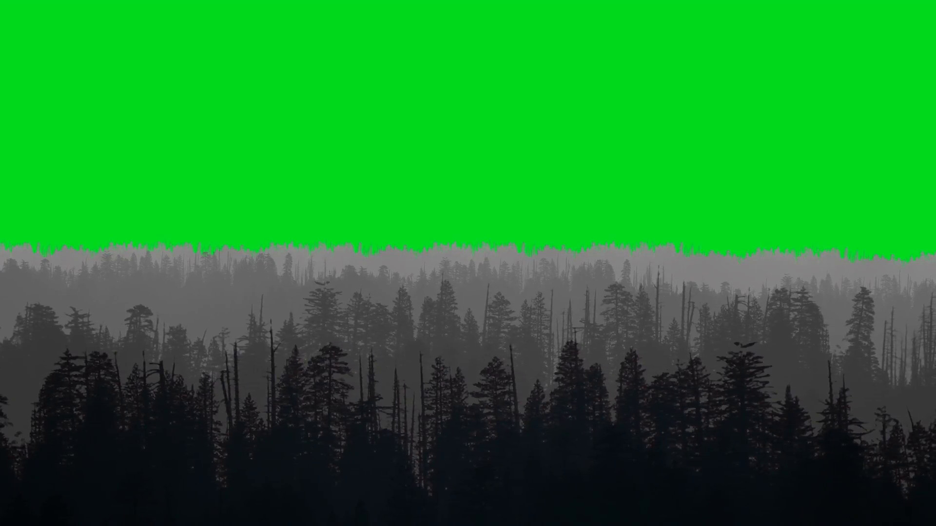 Animated Forest on a Green Screen Background Motion Background – VideoBlocks