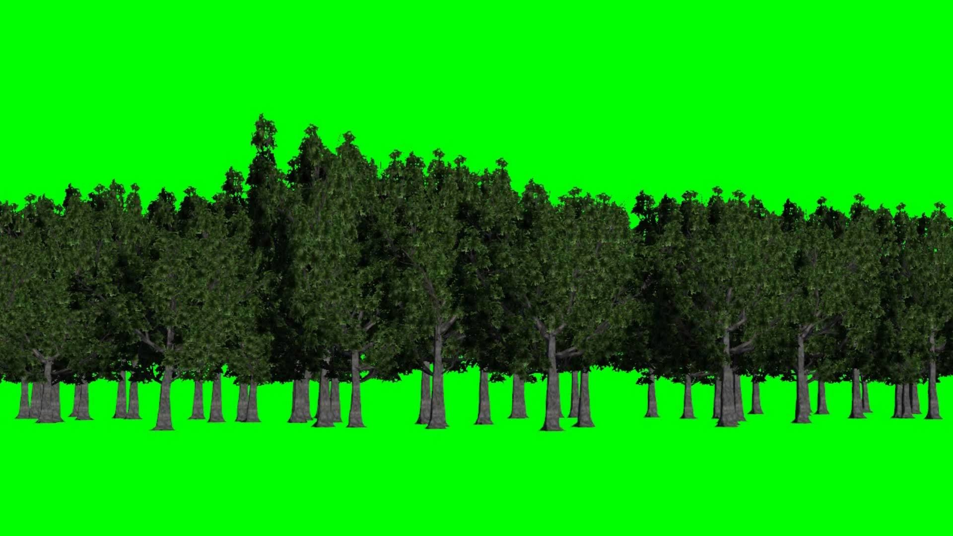 forest green screen – background green and blue – free green screen –  YouTube