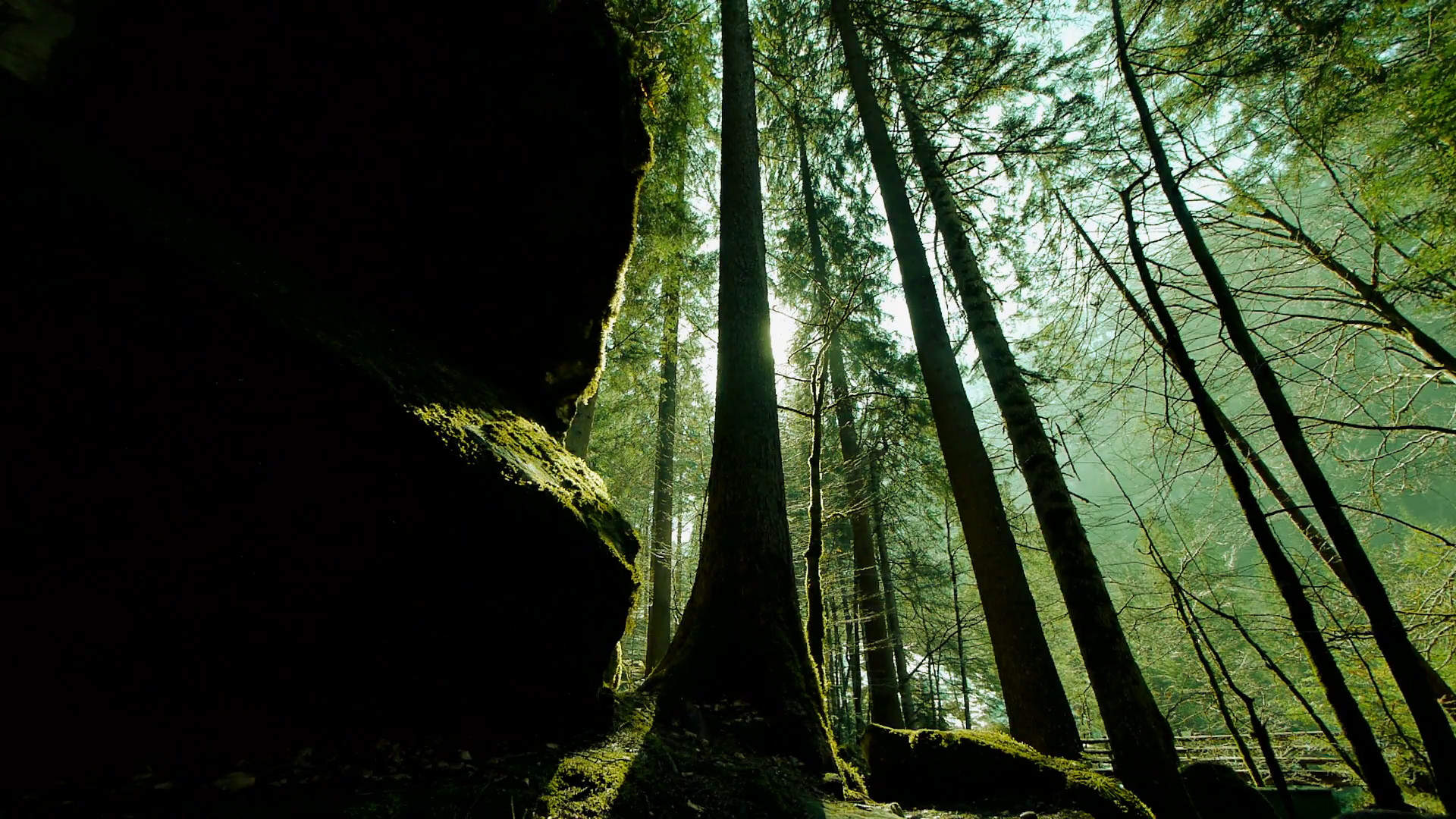 trees in forest. woods. mystical forest. green nature background Stock  Video Footage – VideoBlocks