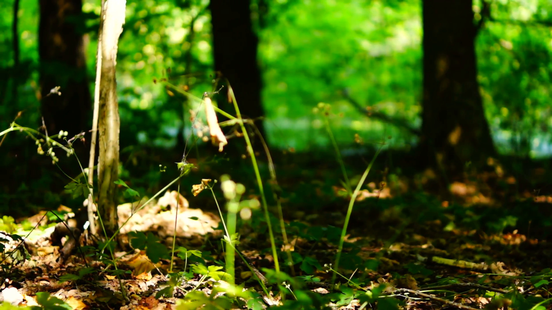 Subscription Library Woods forest, trees background, green nature  landscape, ground, august, pan
