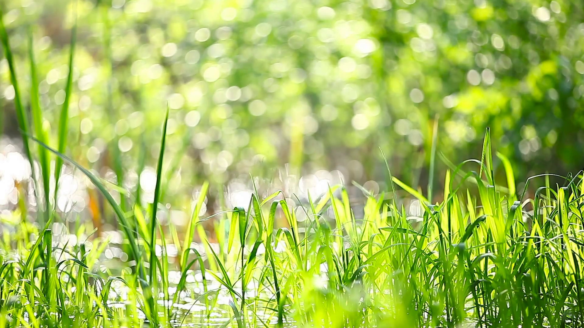 Natural summer background – green grass swaying in the wind. Sunny day in  forest. Stock Video Footage – VideoBlocks