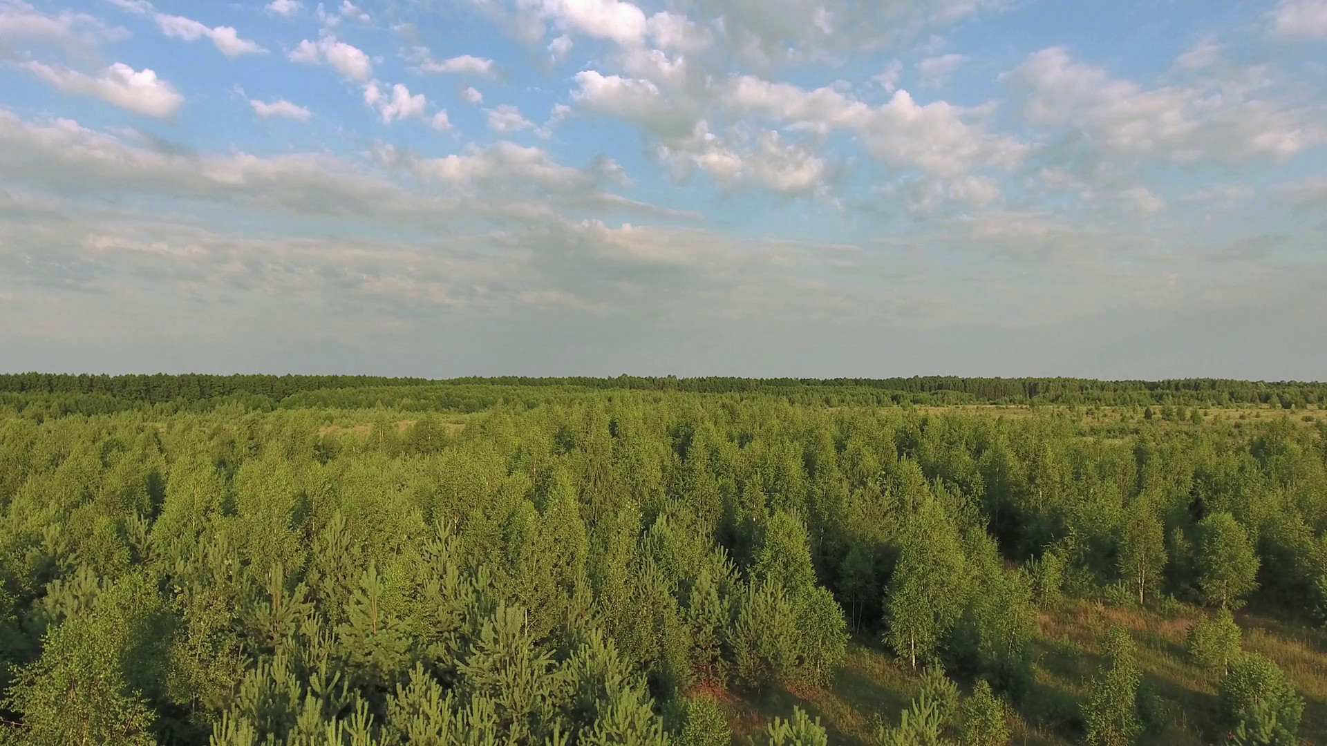 Flight to drone on green pine forest on background of blue sky Aerial  footage Stock Video Footage – VideoBlocks