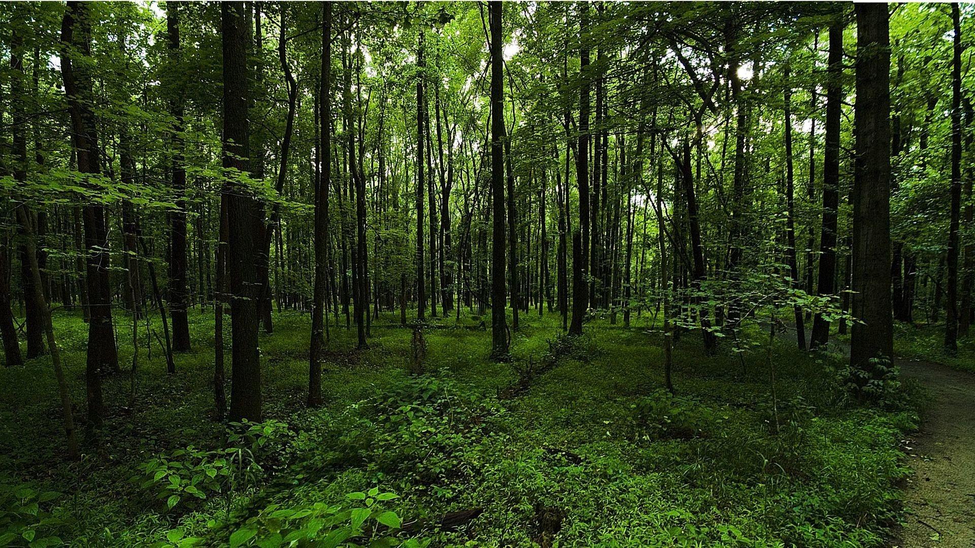 cropped-cropped-dark-green-forest-background-2.jpg