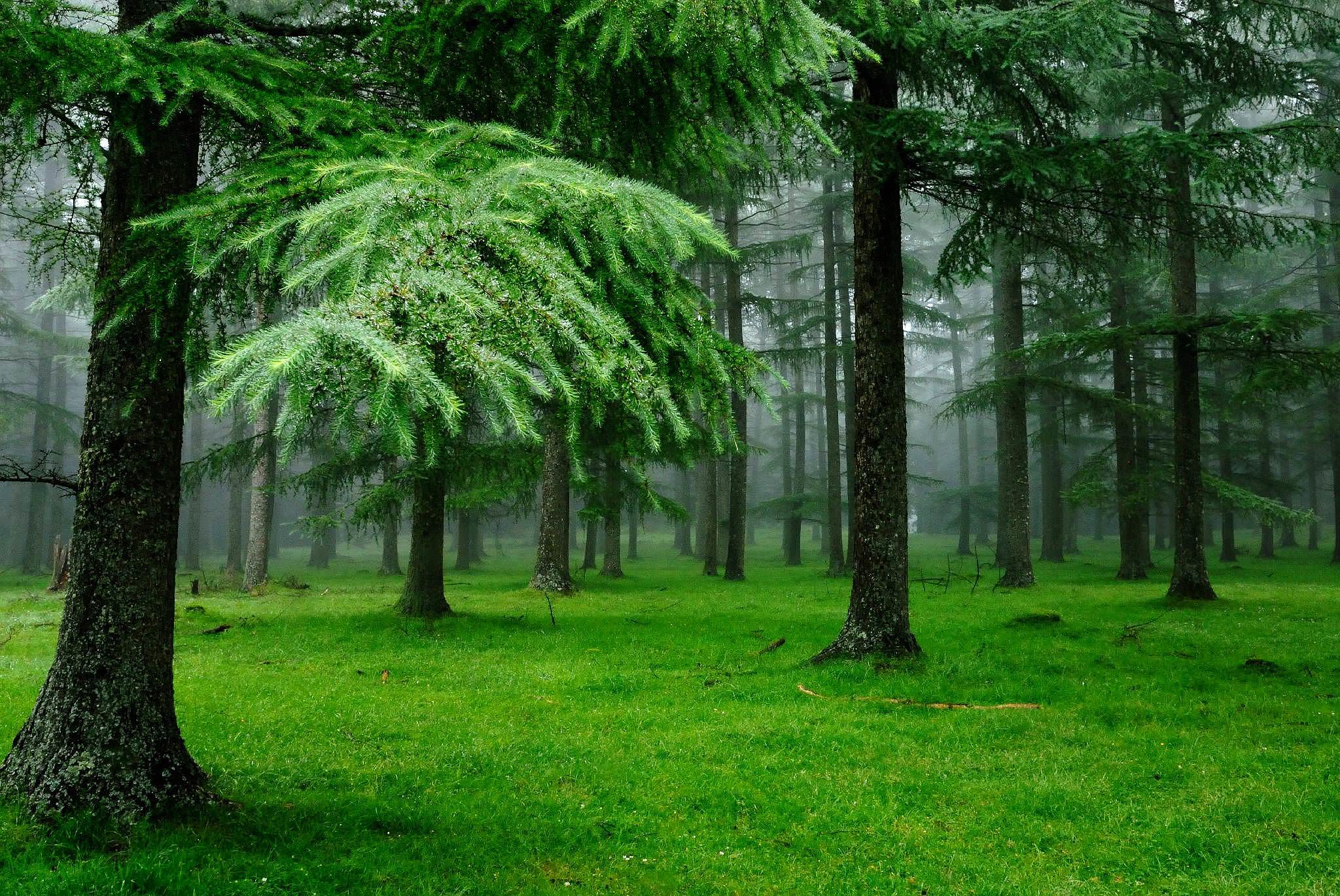 Cool Forest Background For Free