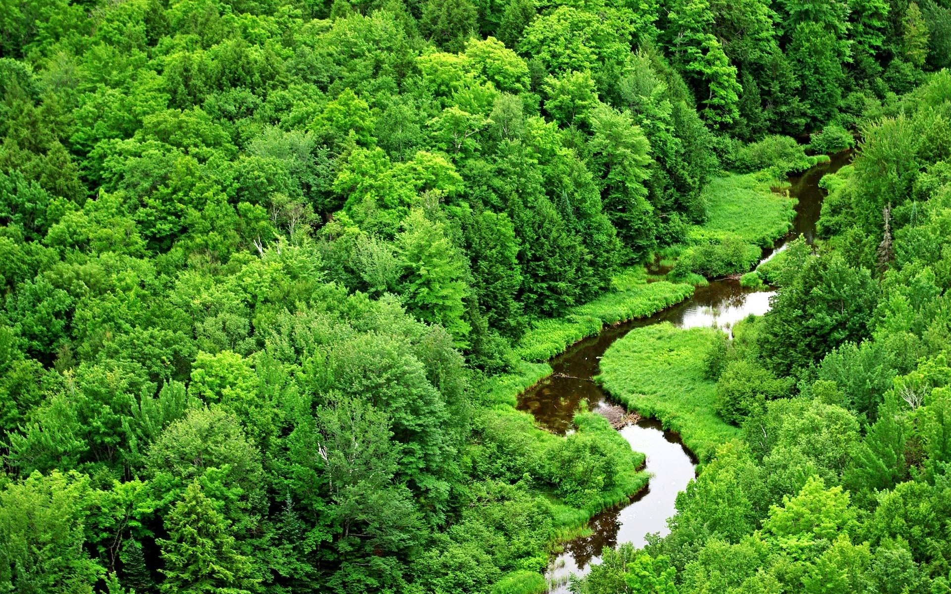 Wallpapers Backgrounds – forest green scenery wallpapers landscape stream  river awesome
