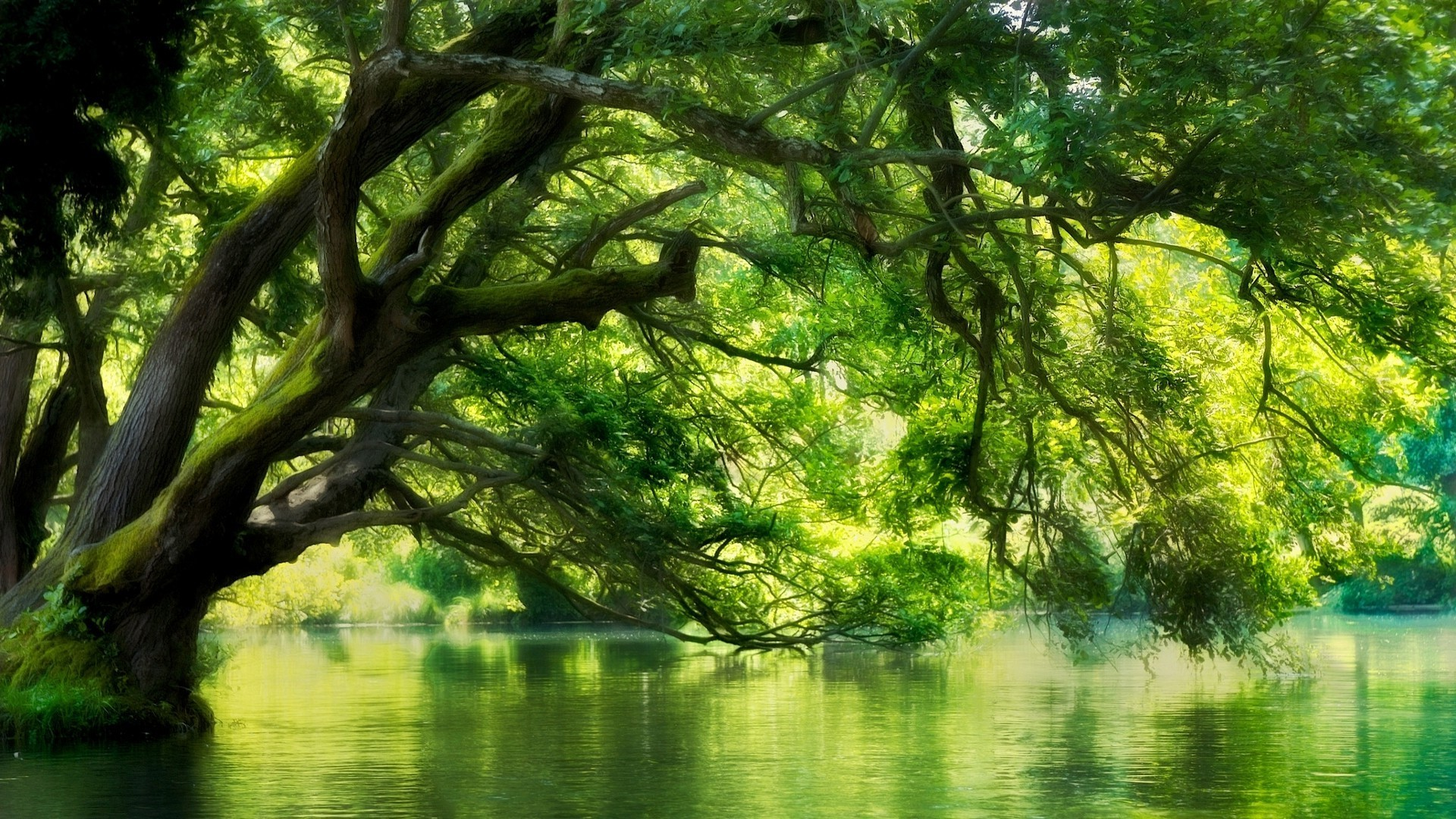 landscape, Nature, River, Macedonia, Forest, Green, Water, Trees Wallpapers  HD / Desktop and Mobile Backgrounds