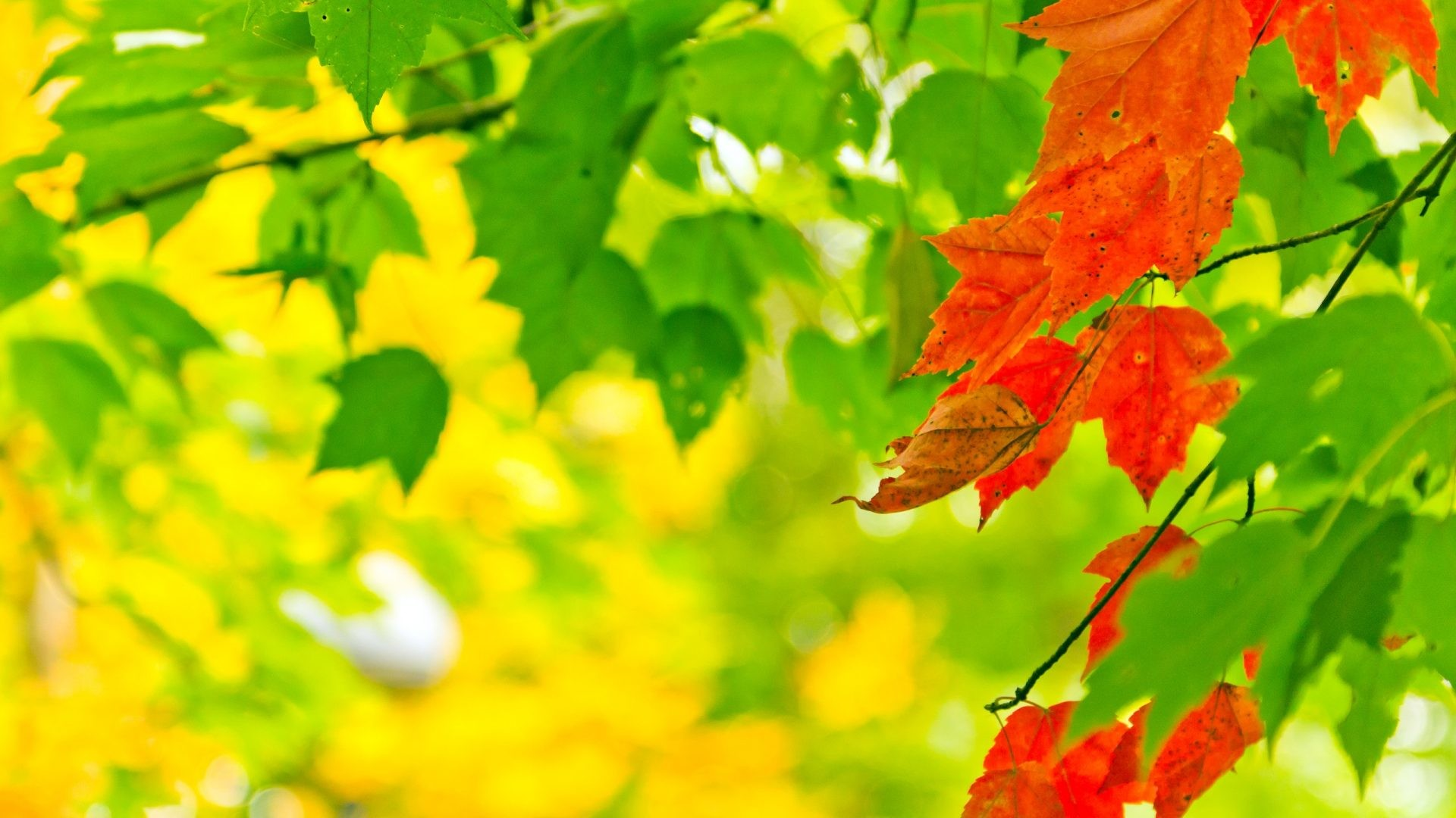 Green Tag – Ones Green Leaf Red Nature Large Photo for HD 16:9 High