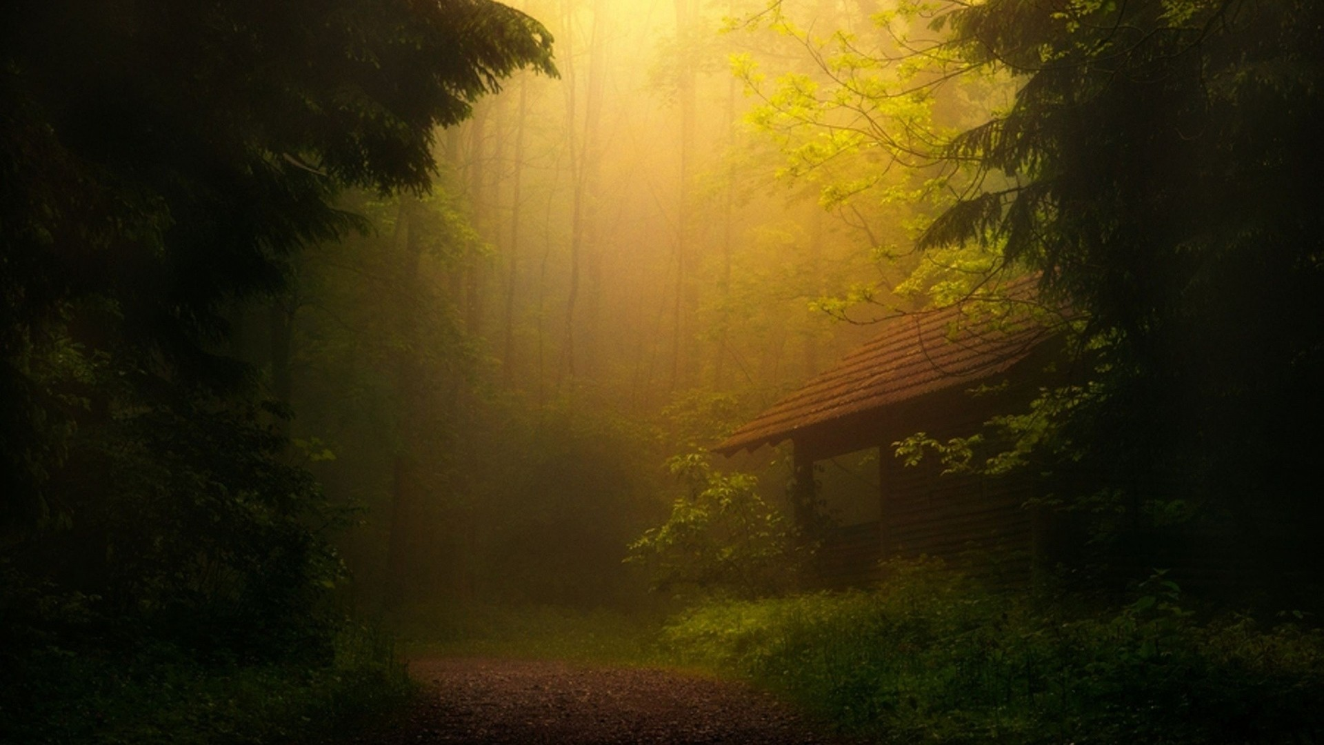 Preview wallpaper fog, trees, forest, thicket 1920×1080