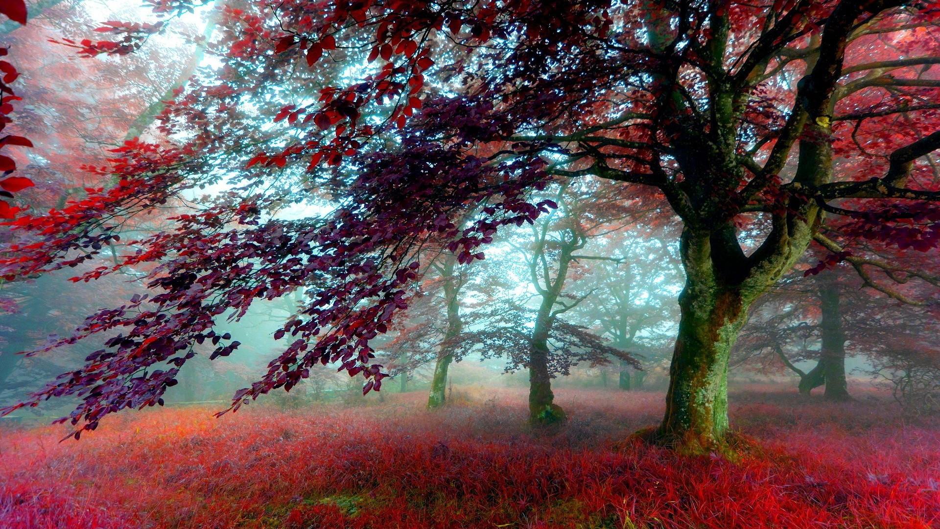 Nature Wallpaper HD Wallpaper …