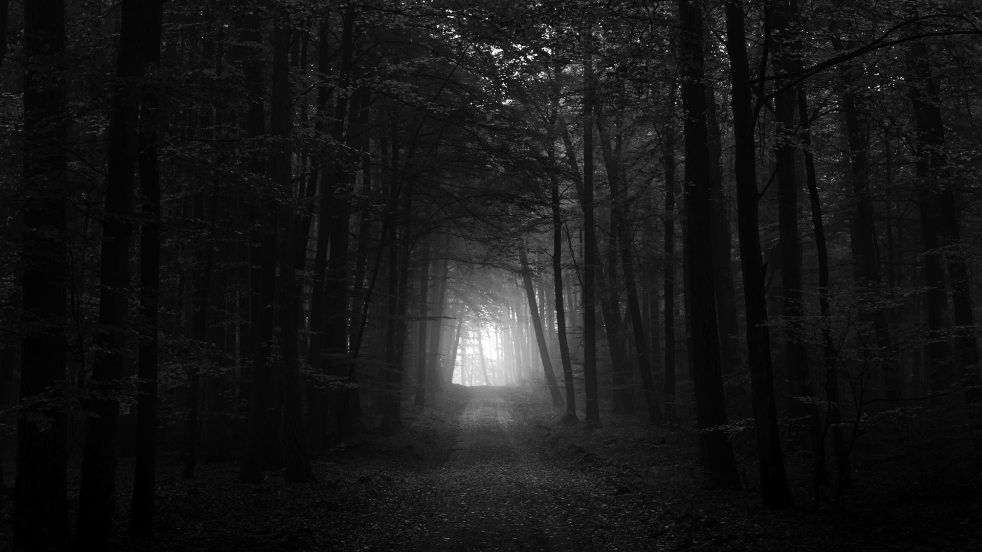 Black And White Pictures Anime Forest 15 Wide Wallpaper. Black And White  Pictures Anime Forest 15 Wide Wallpaper