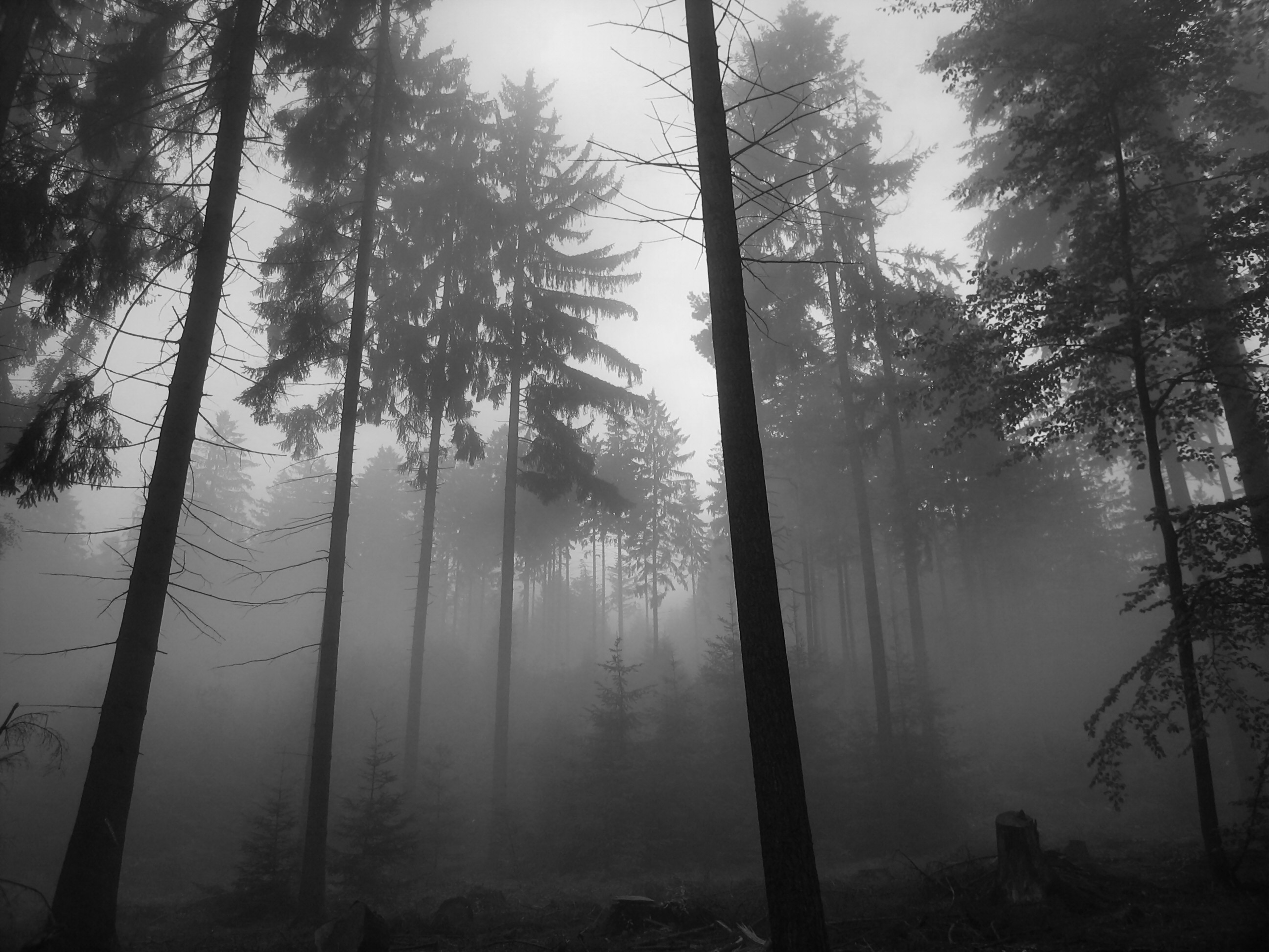 Black And White Pictures Anime Forest 8 Background