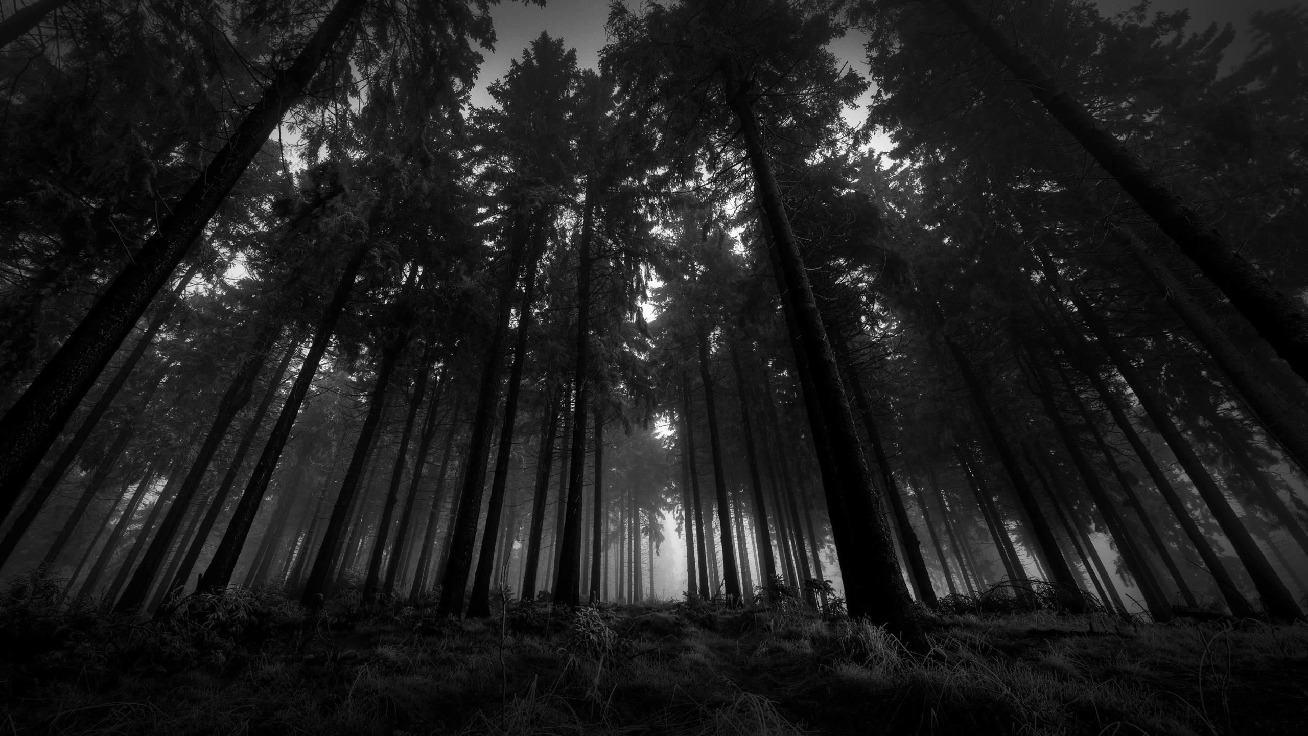 Dark Forest Moon High Definition Wallpaper – HD Wallpapers
