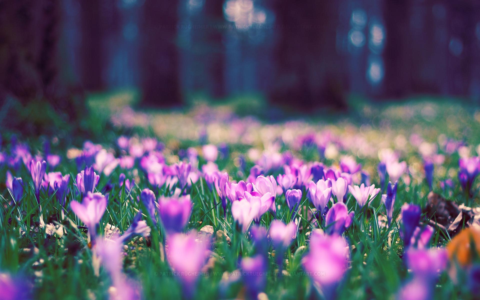 Spring Flower Desktop Backgrounds – Wallpaper Cave