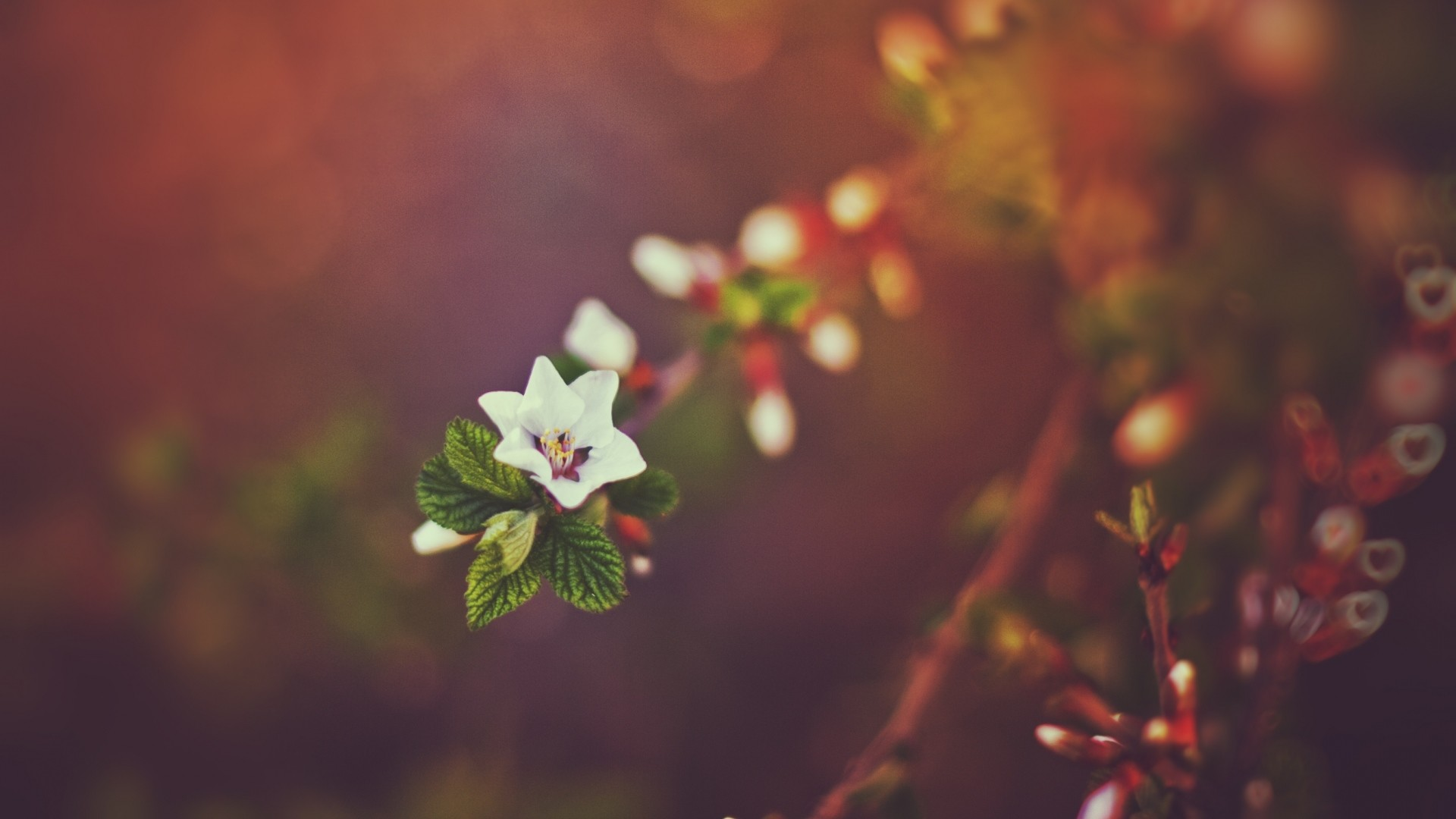 Preview wallpaper spring, nature, bokeh, sunset, branches 1920×1080