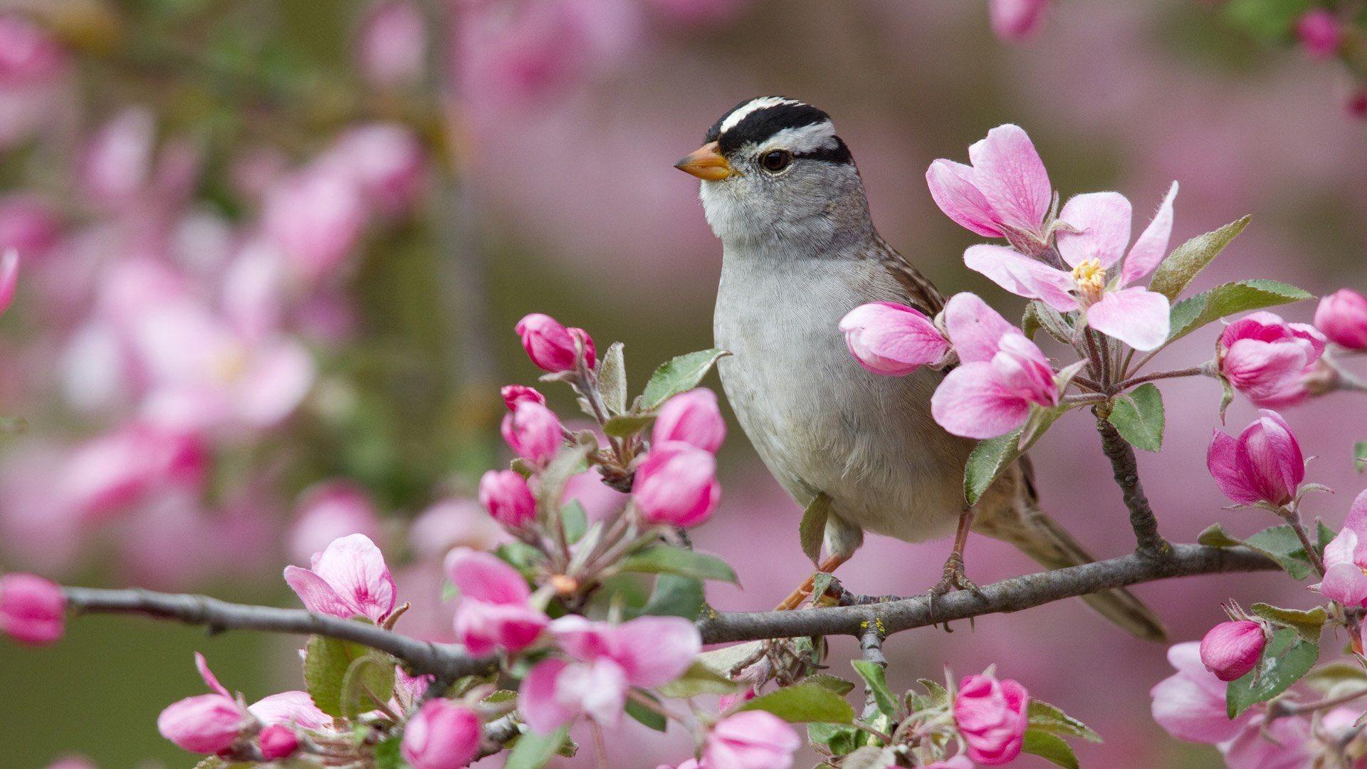… Spring Animal Desktop Backgrounds Hd. Download
