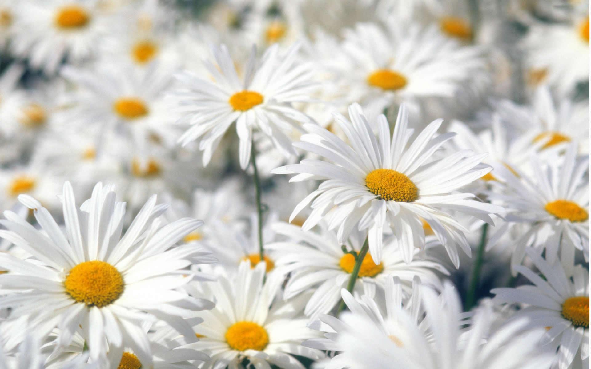 Top Collection of Spring Wallpapers, Spring Desktop Wallpaper Free .