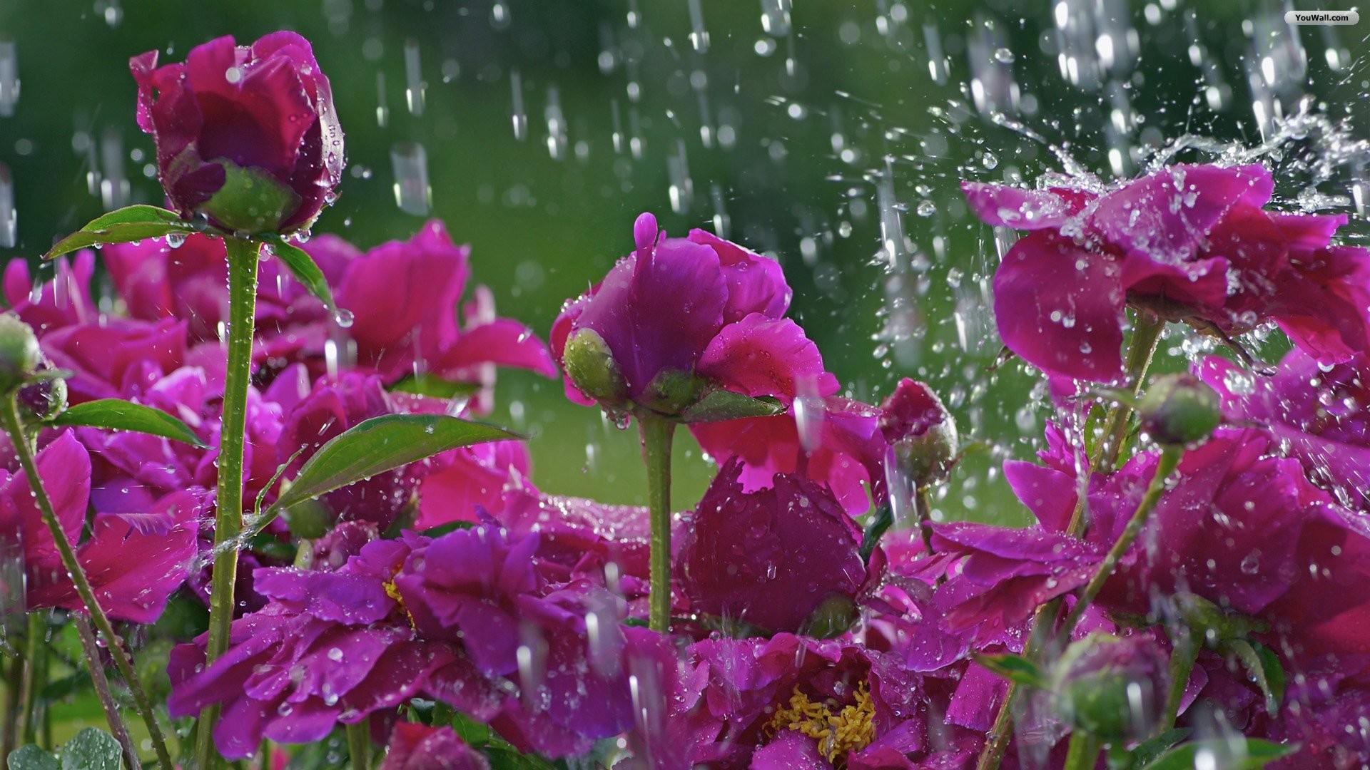 Rainy Spring Desktop Wallpaper