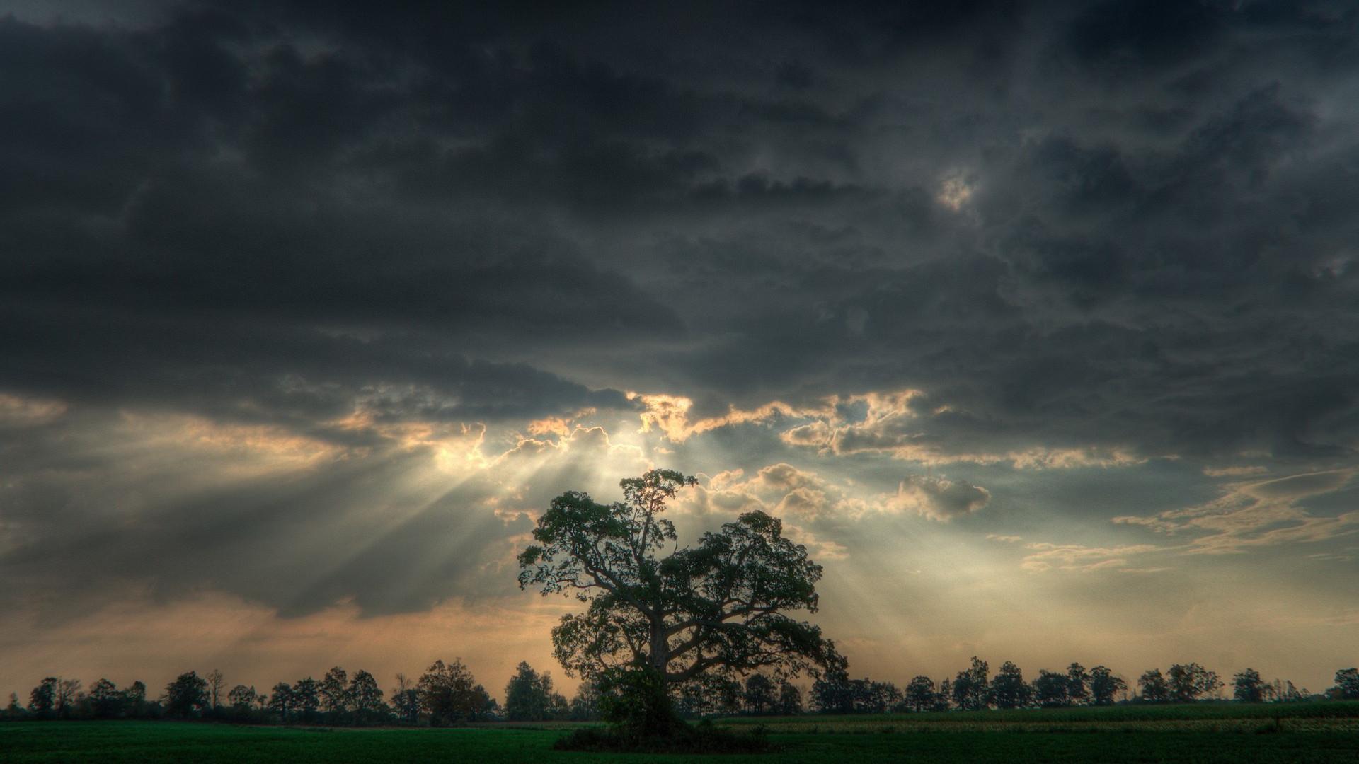Tree under cloudy sky HD Wallpaper Tree …