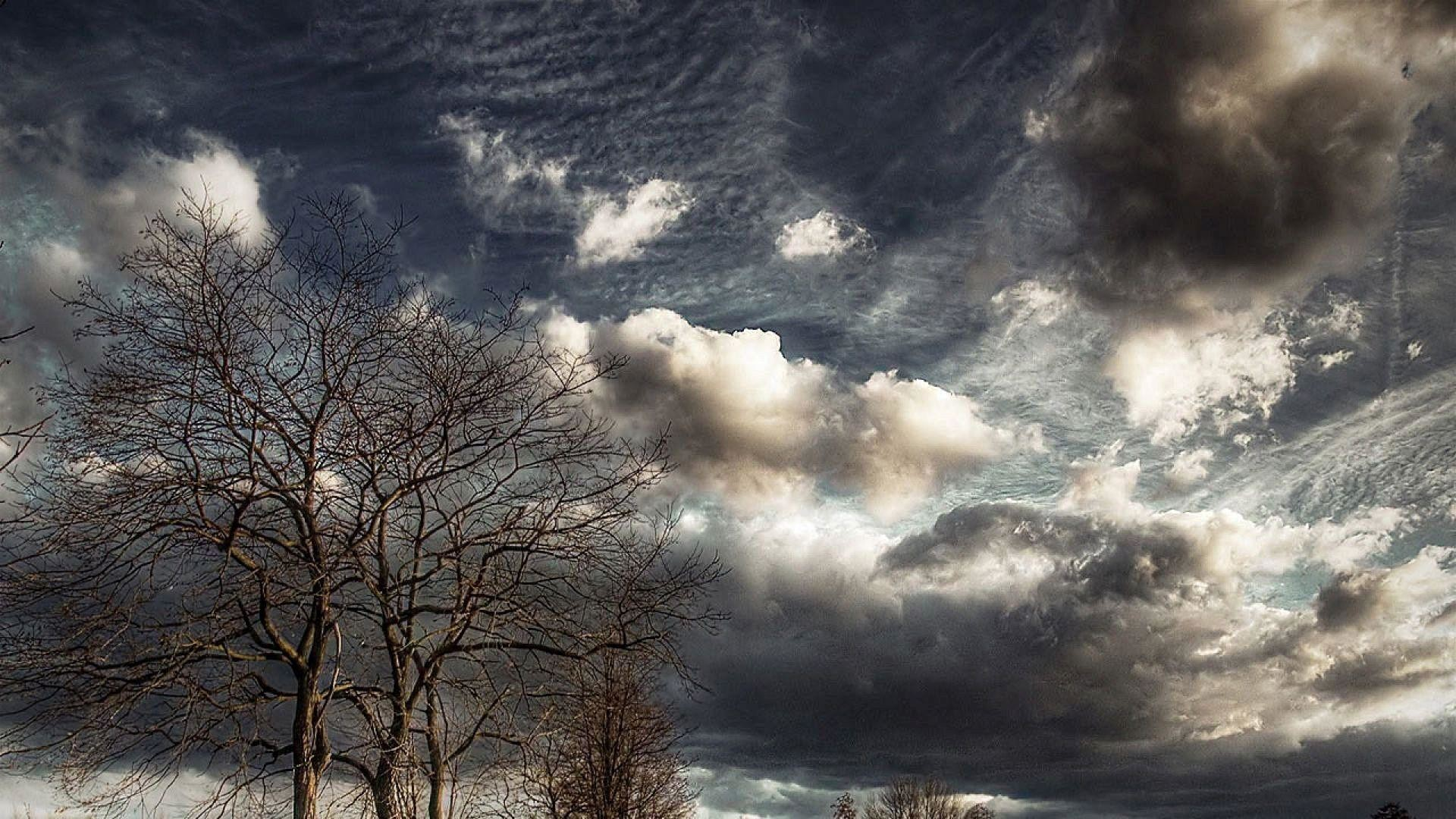 Cloudy sky above the trees wallpaper
