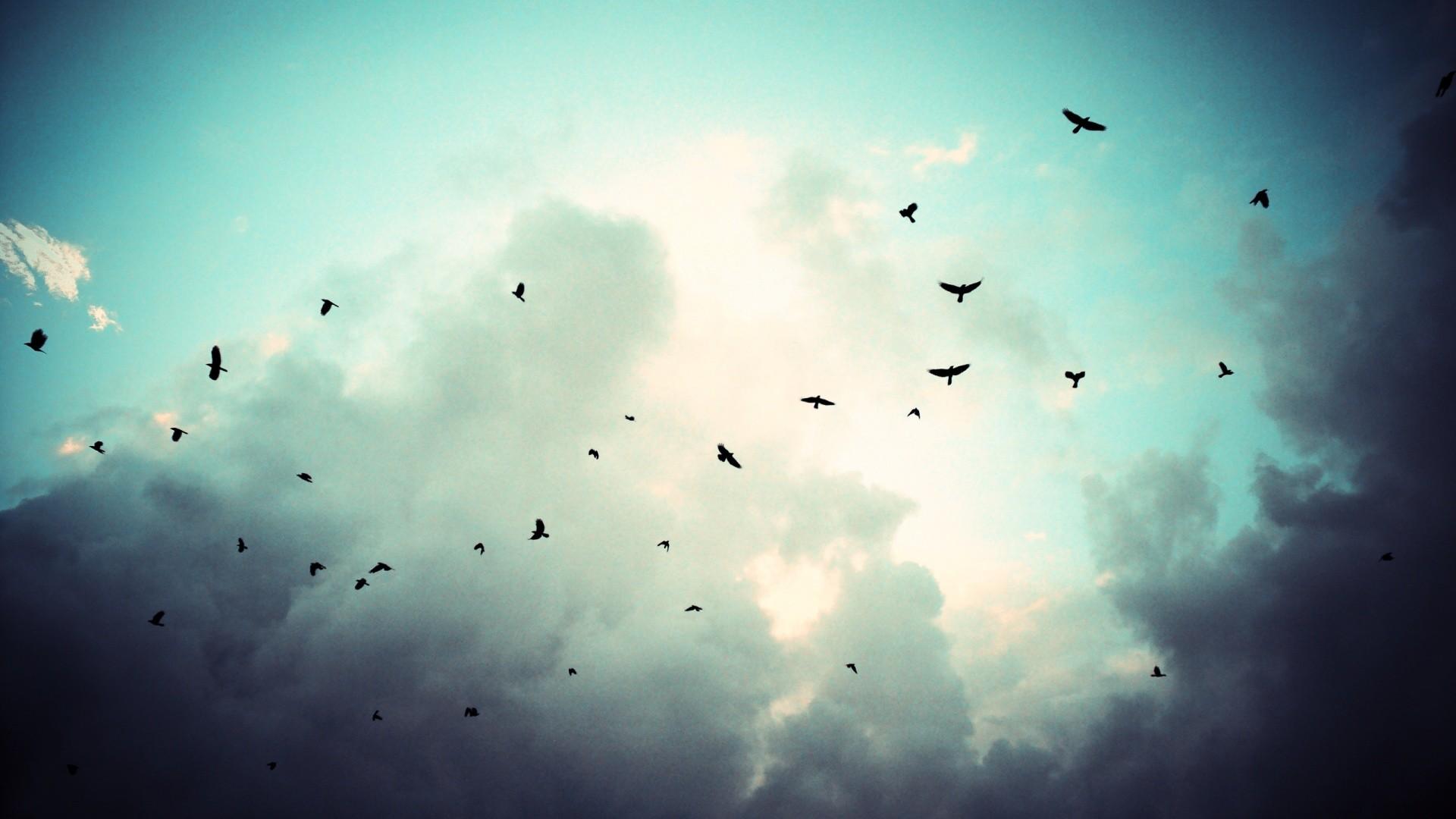birds flying in cloudy sky hd wallpapers