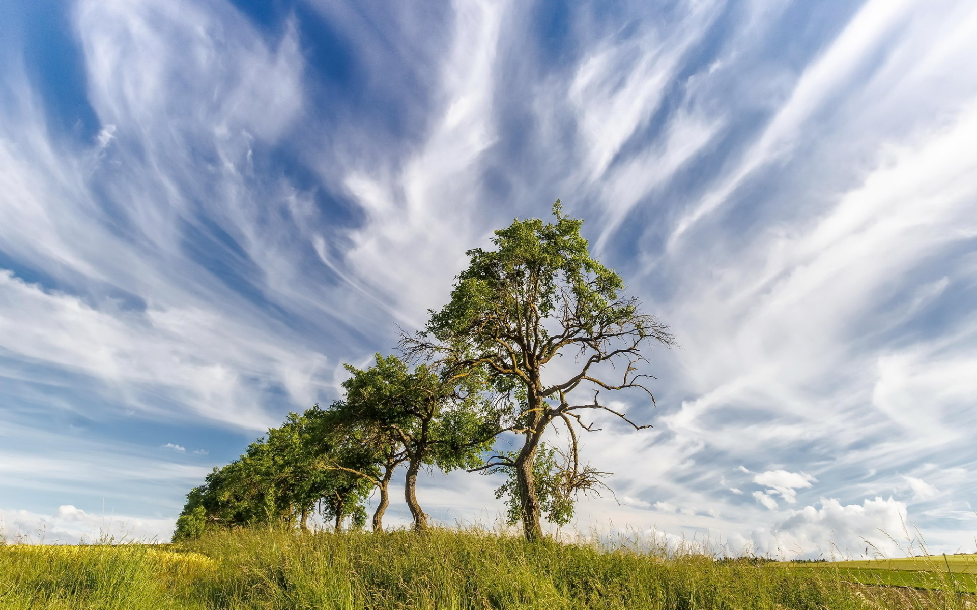 Trees Row Field Cloudy Sky wallpapers and stock photos