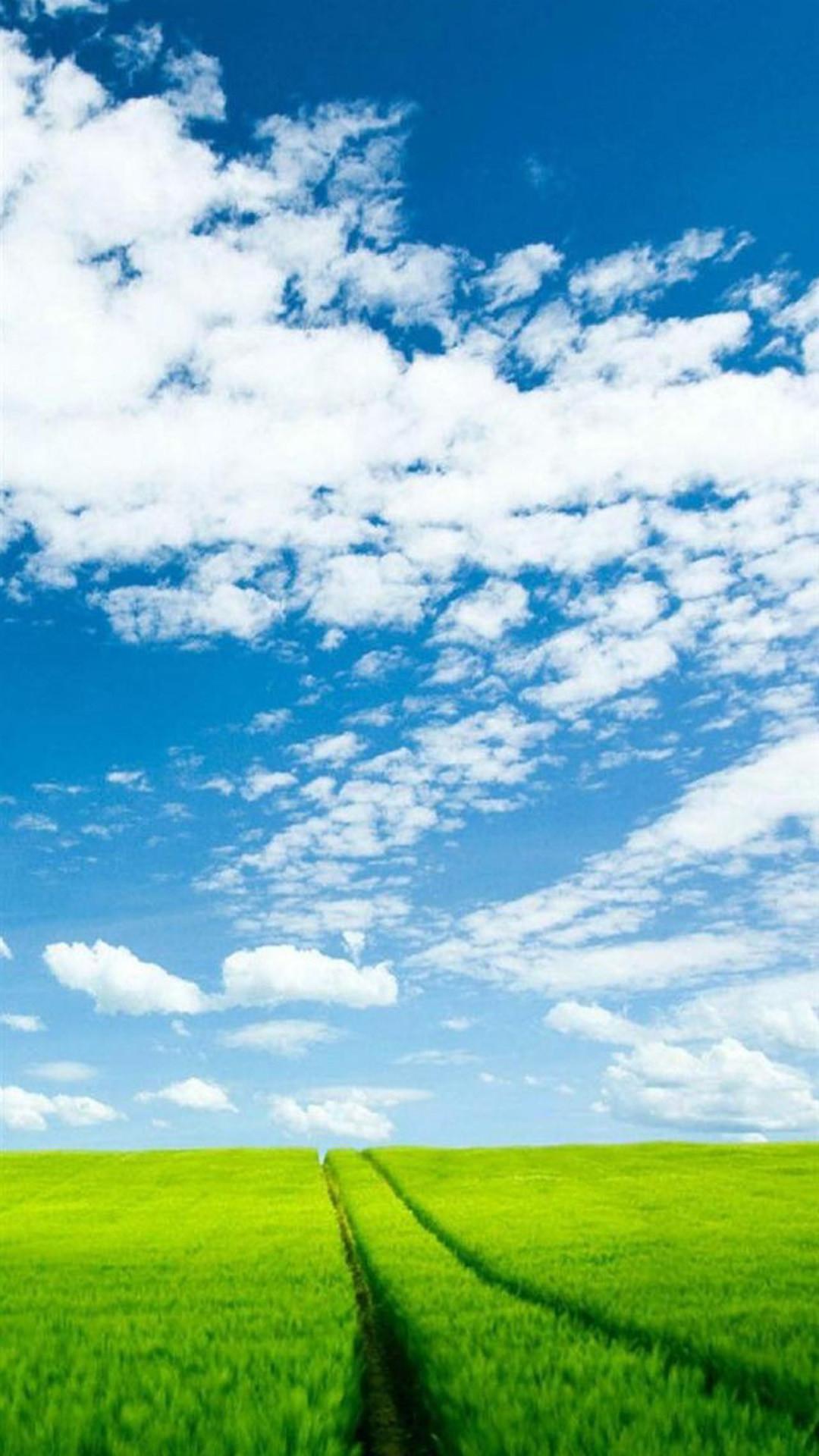 Nature Sunshine Green Corp Field Cloudy Sky iPhone 8 wallpaper