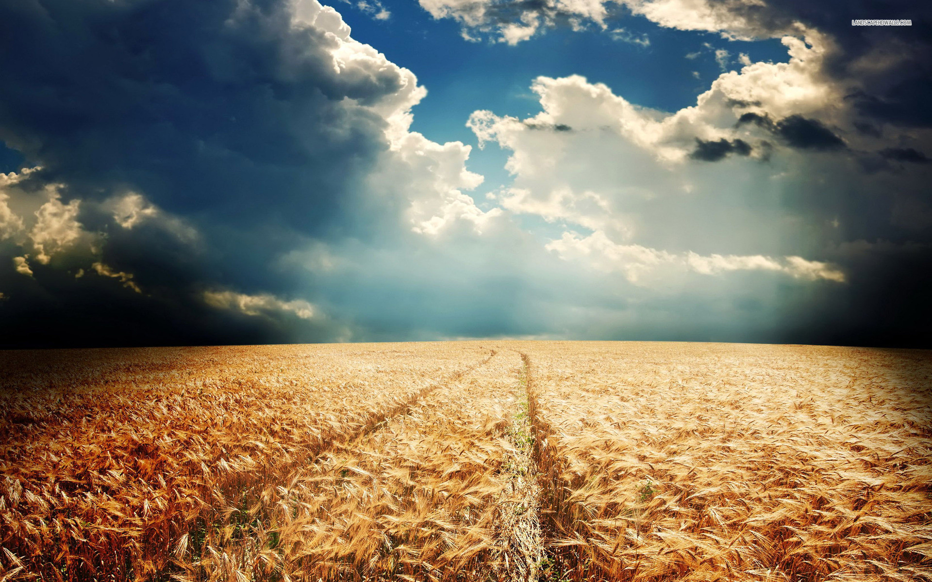 Pretty Wheat Field Cloudy Sky wallpapers and stock photos