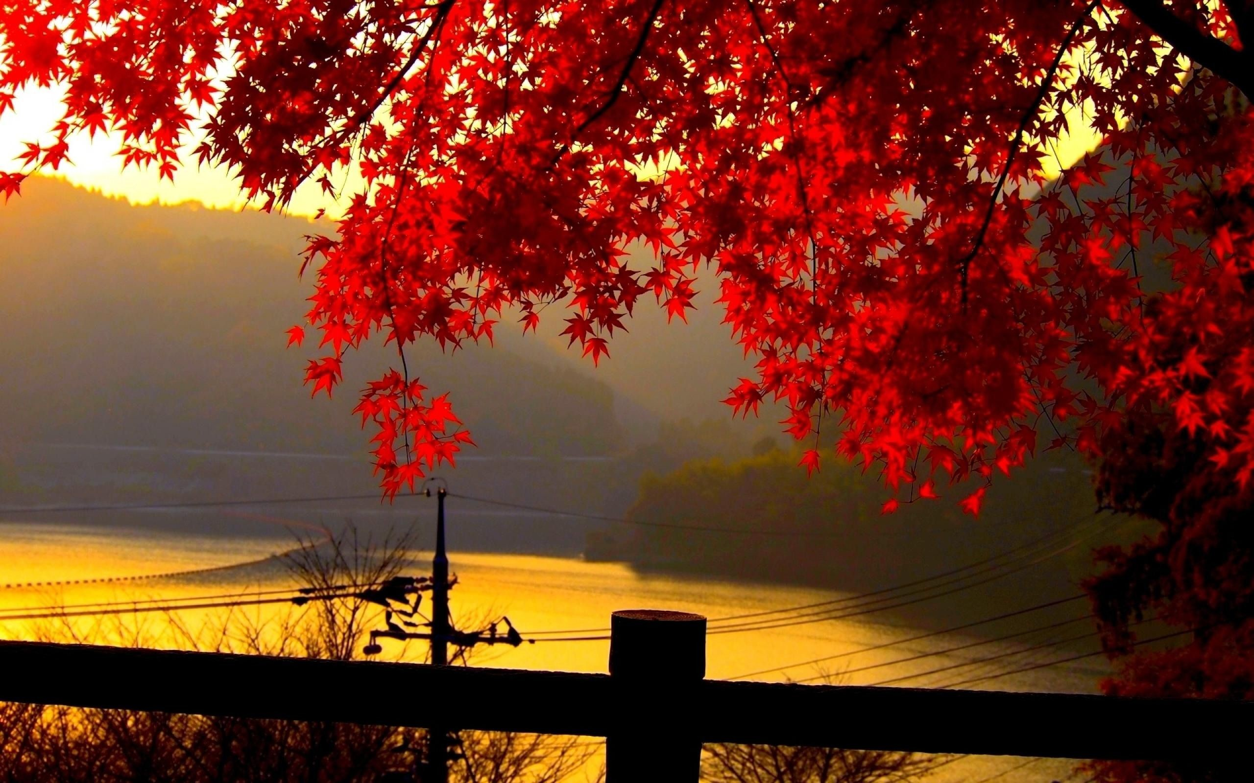 Red autumn leaves at dusk autumn, leaves, dusk) via www.in. Find this Pin  and more on HD Wallpapers …