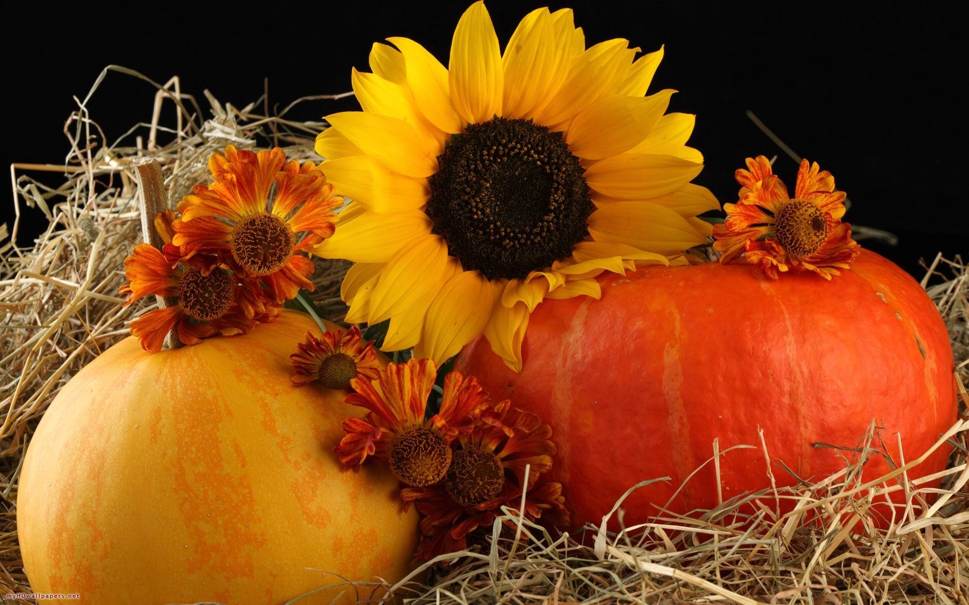 -wallpapers.feedio.net/sunflower-chain-hd-desktop-mobile