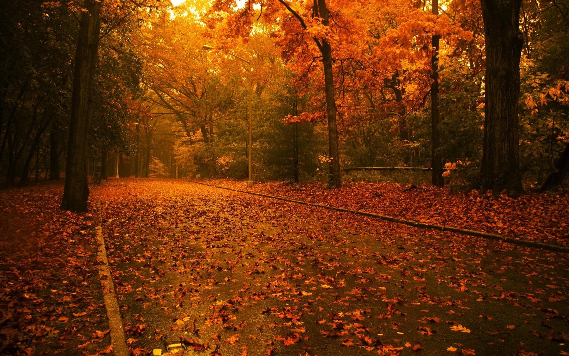 Fall Screensavers and Desktop Backgrounds