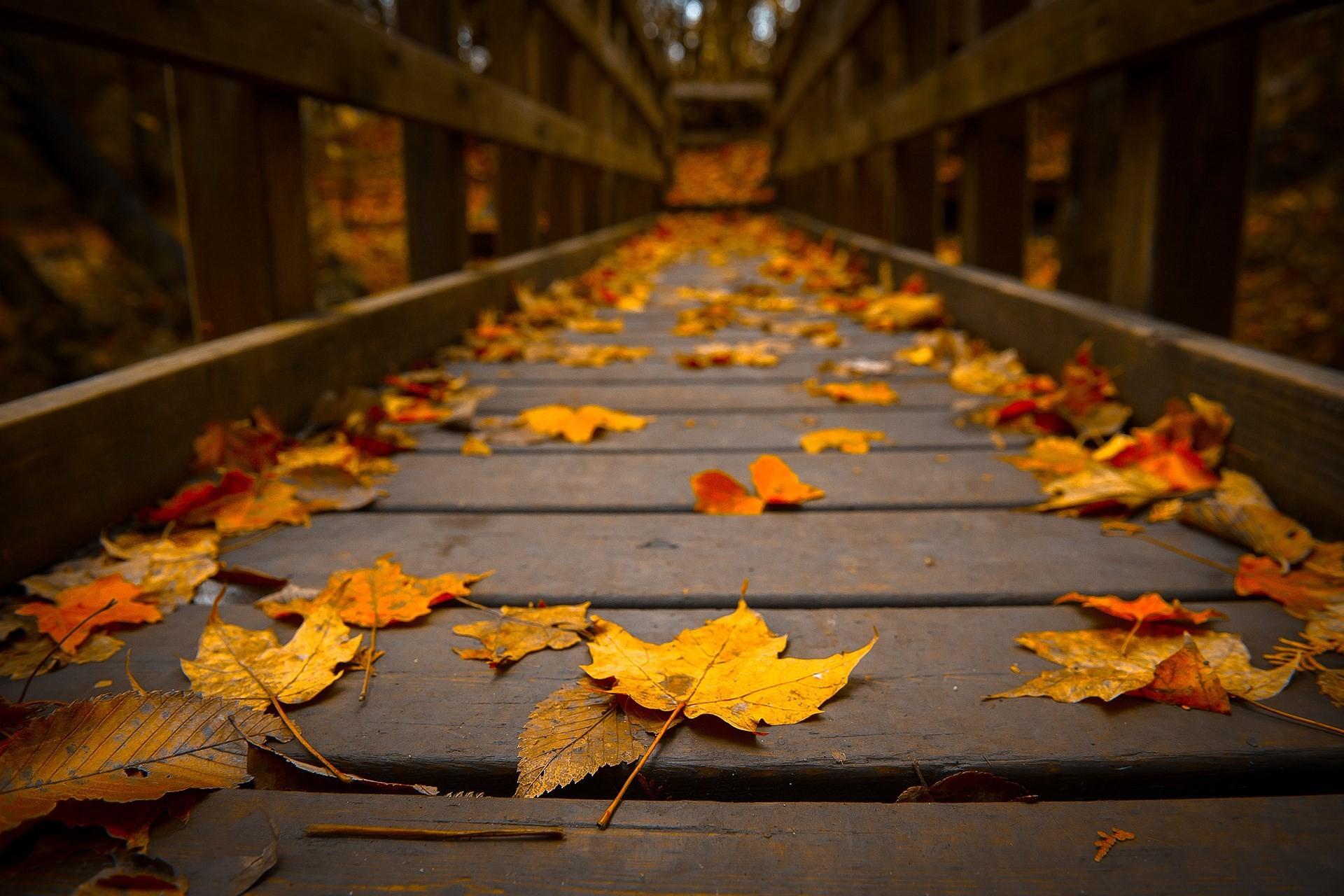 fall wallpaper pack 1080p hd – fall category