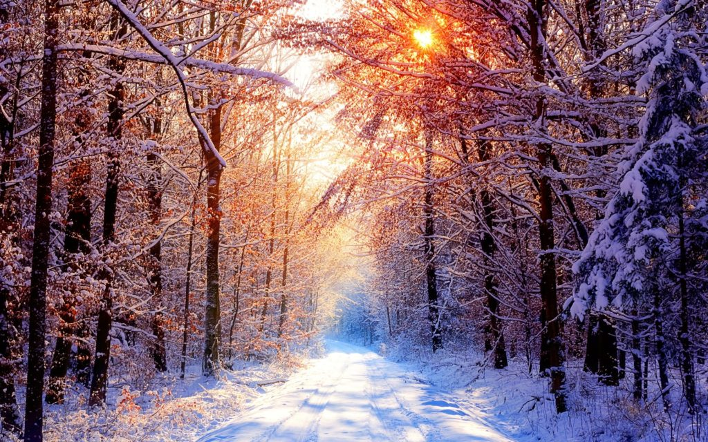Daily Wallpaper: Snowy Forest Road on a Beautiful Winter Day | I Like To  Waste My Time