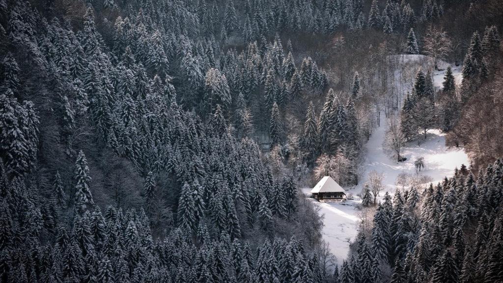 Hd-wallpapers-wallpaper-winter-forest-black-snowy-1920×1080-wallpaper.jpg