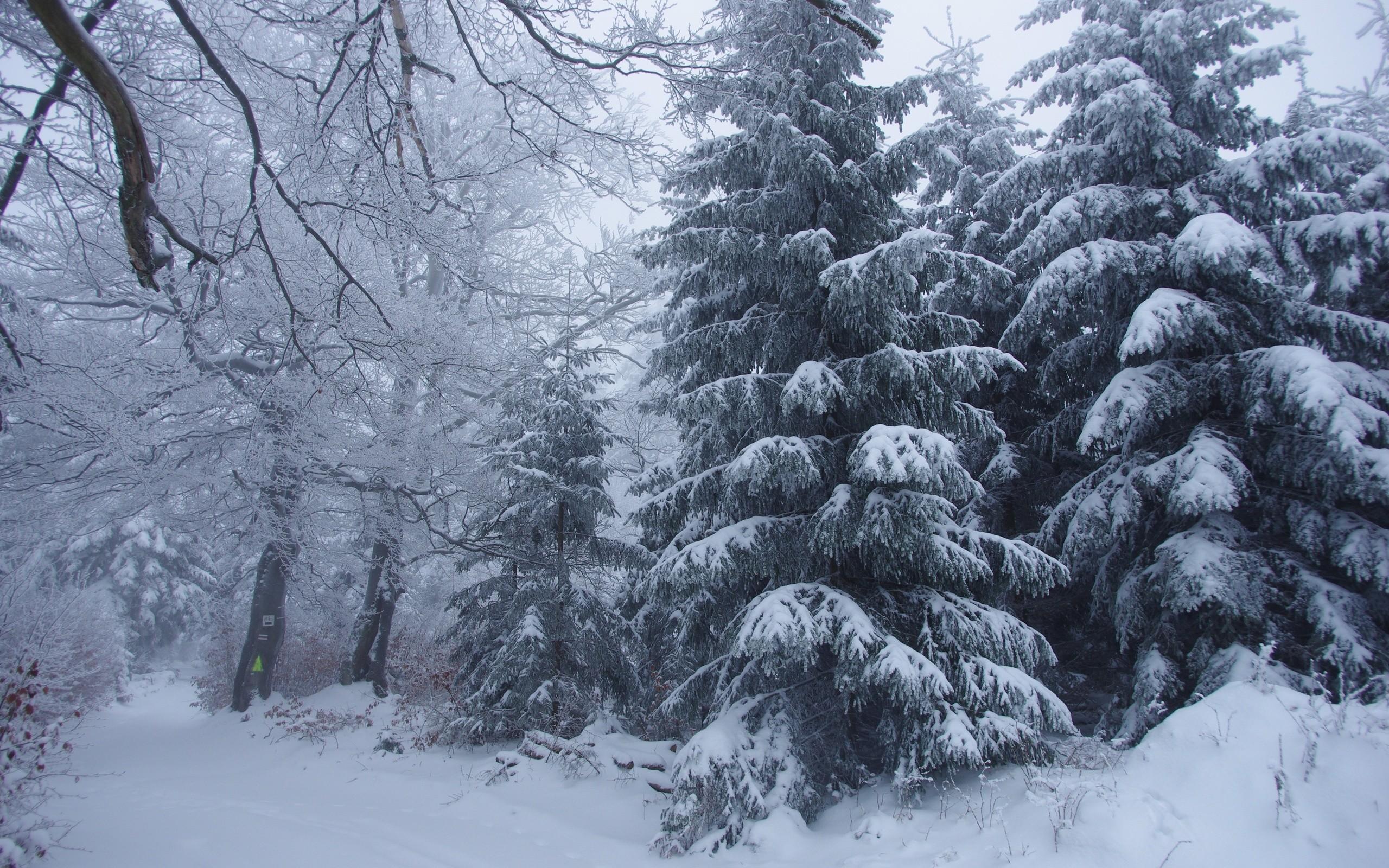 Download Wallpaper 2560×1024 Winter, Forest, Landscape Dual .