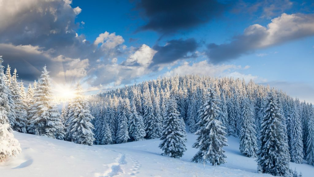 Snow Forest Wallpapers – Wallpaper Cave
