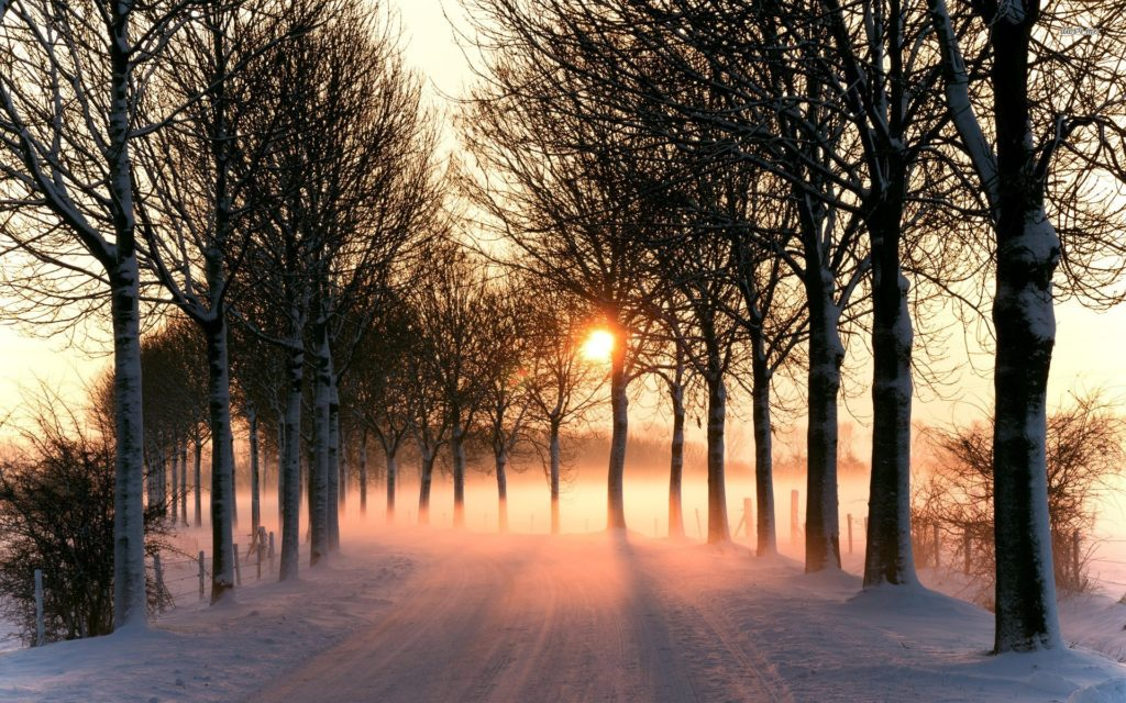 Sunset Snowy Forest