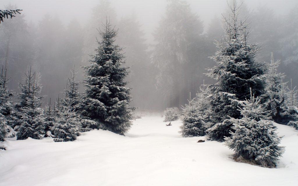 foggy winter forest wallpaper 13897