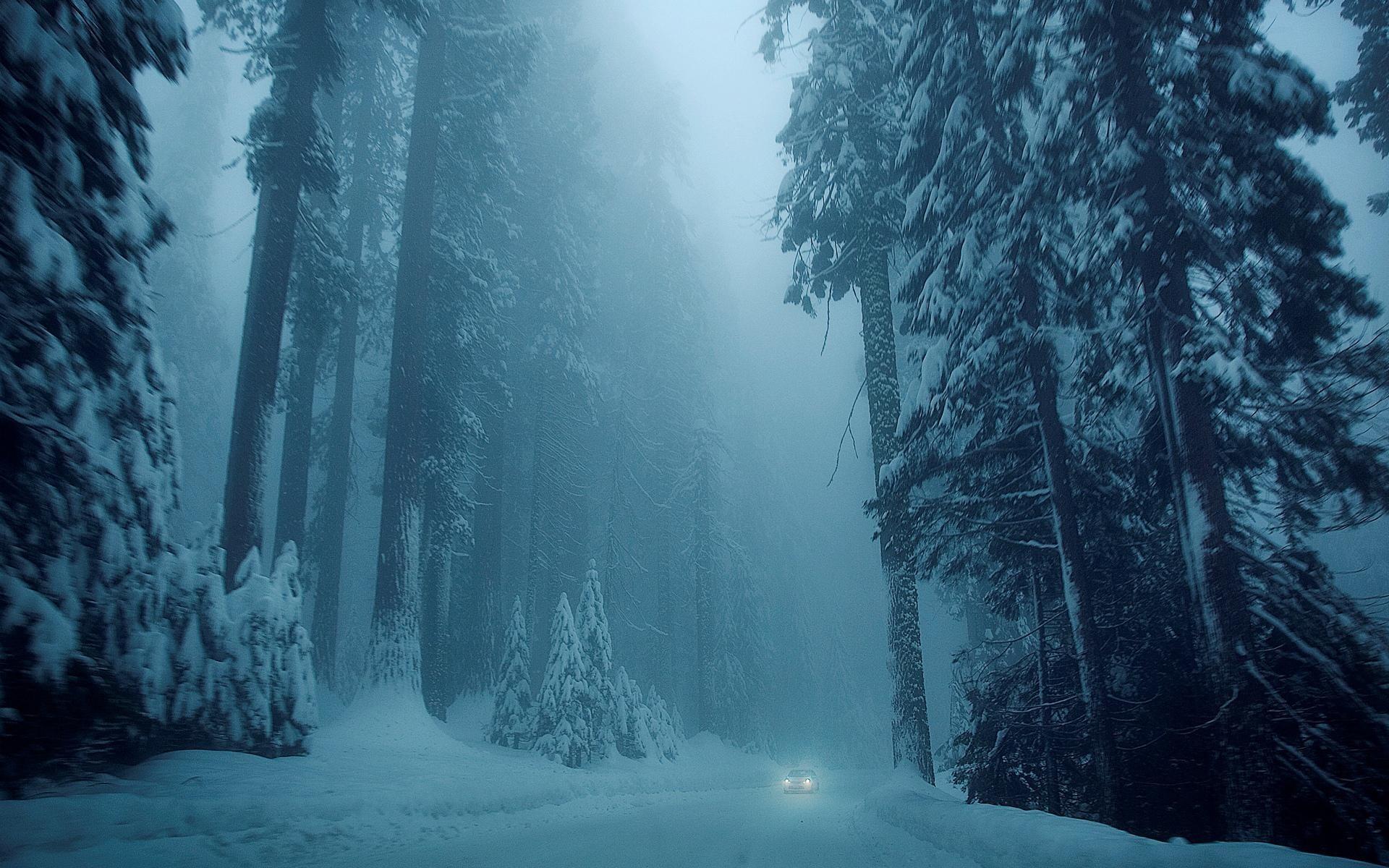 <b>winter night forest</b> fox HD <b>wallpaper
