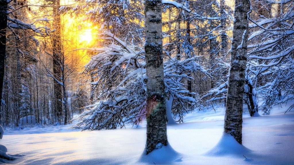 Winter Forest Desktop Wallpaper, Winter Forest Pictures