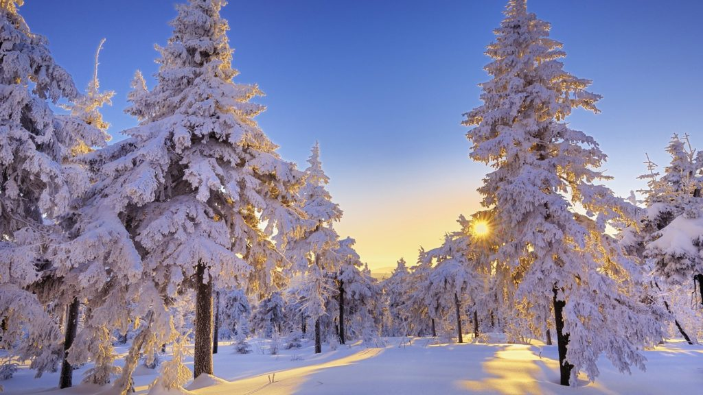 Beautiful trees in winter forest
