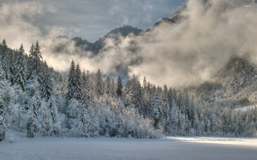 … fog rising from the snowy forest 2 wallpaper nature wallpapers …