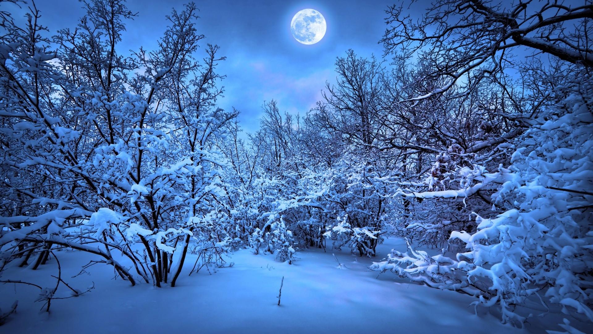 Blue Winter Forest Full Moon