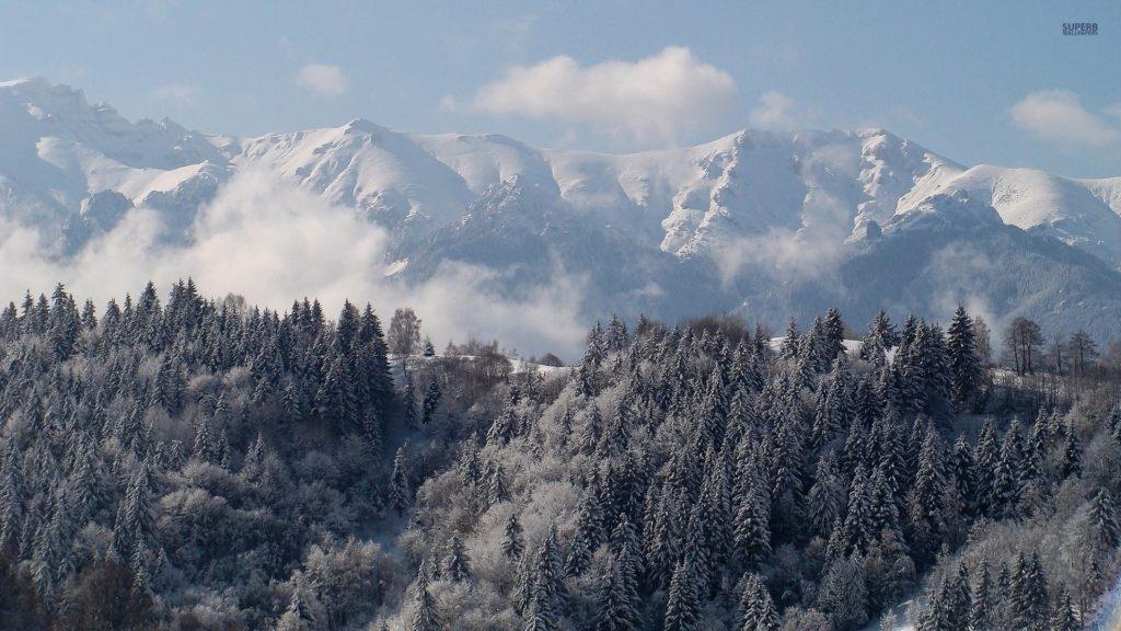 Snow Forest Wallpaper – WallpaperSafari