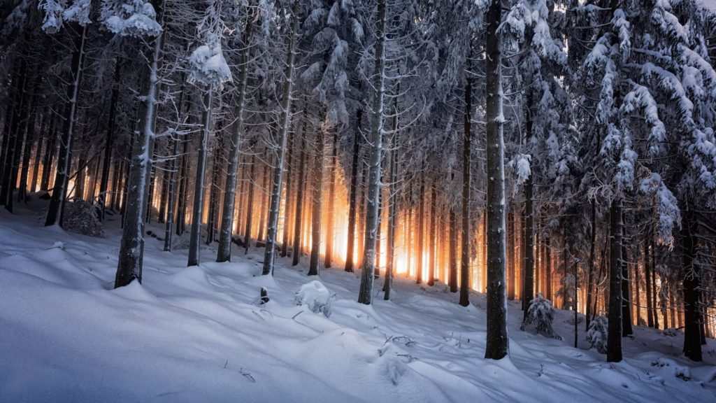 Trees: Dark Nature Trees Night Black Forest Wallpapers Hd 3d for .