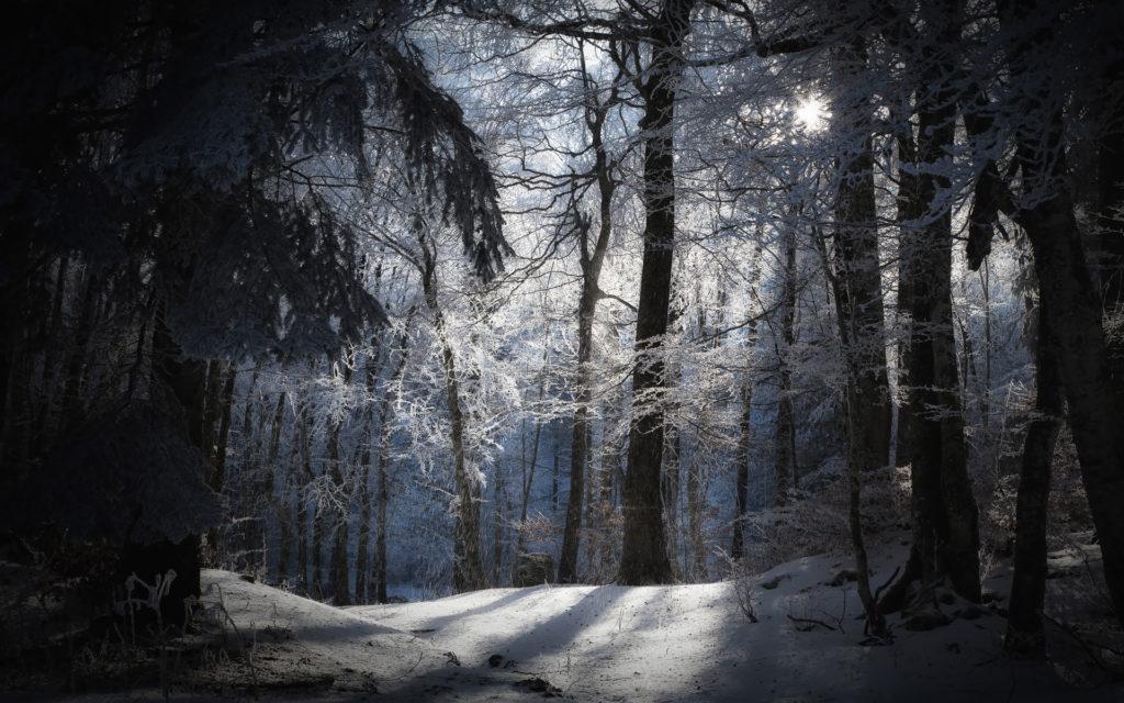 <b>Winter Snow</b> Pictures Wallpaper – WallpaperSafari