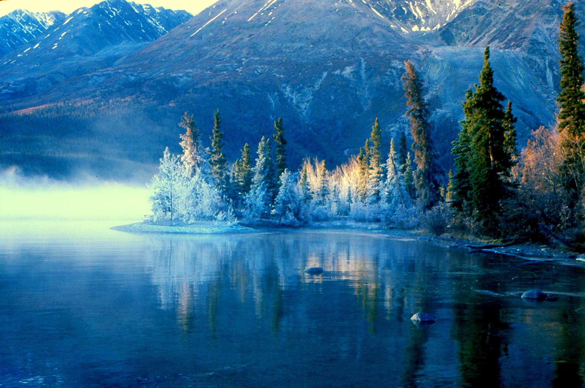 Yukon Winter Forest