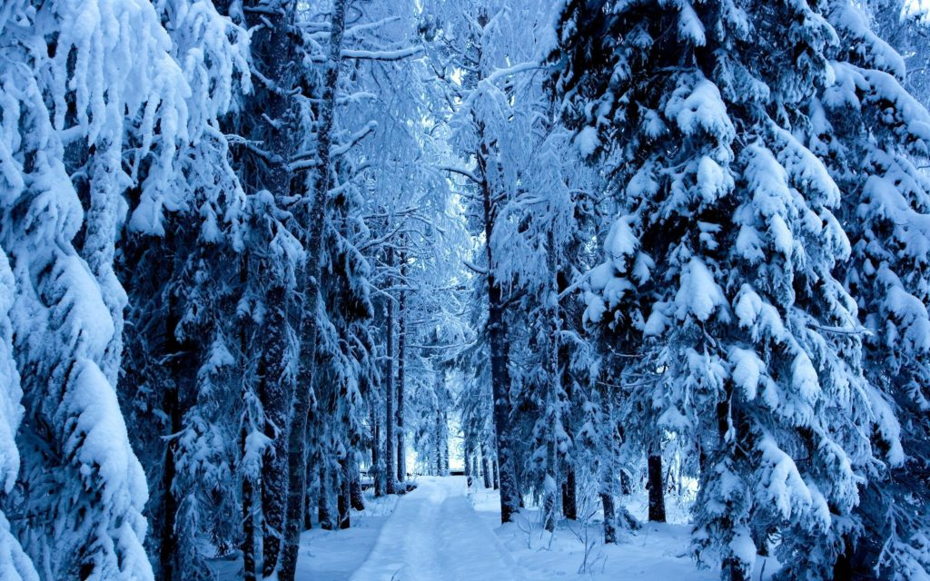 awesome nature winter snow trees for android wallpaper Check more at  https://www