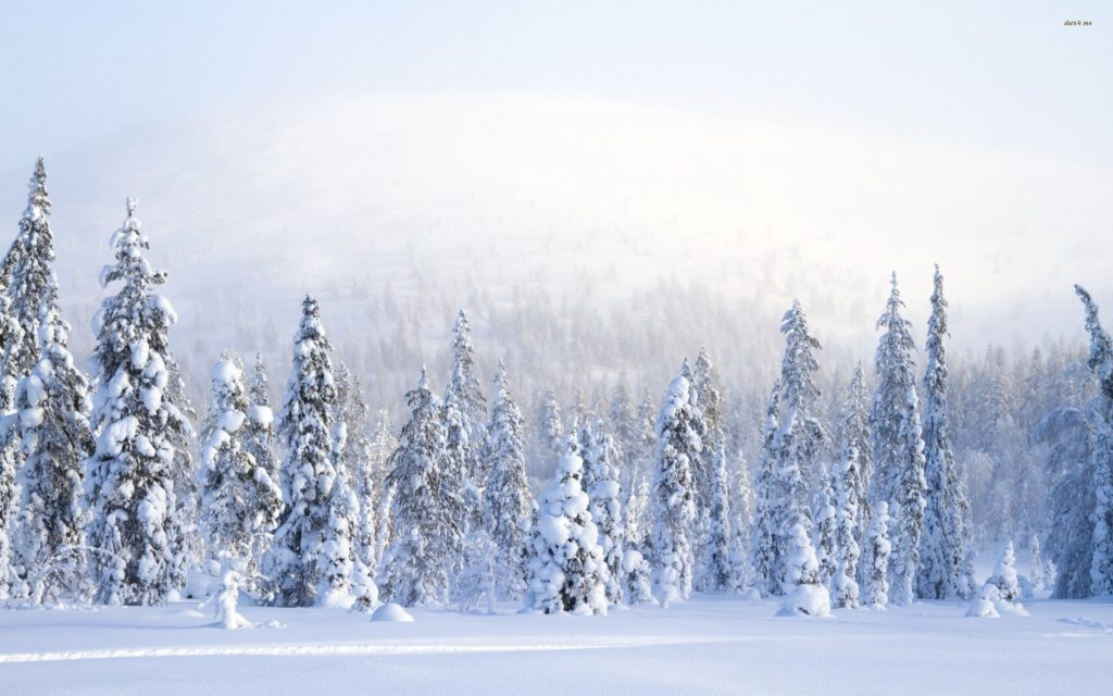 Beautiful Winter Forest amp Pond wallpapers and stock photos