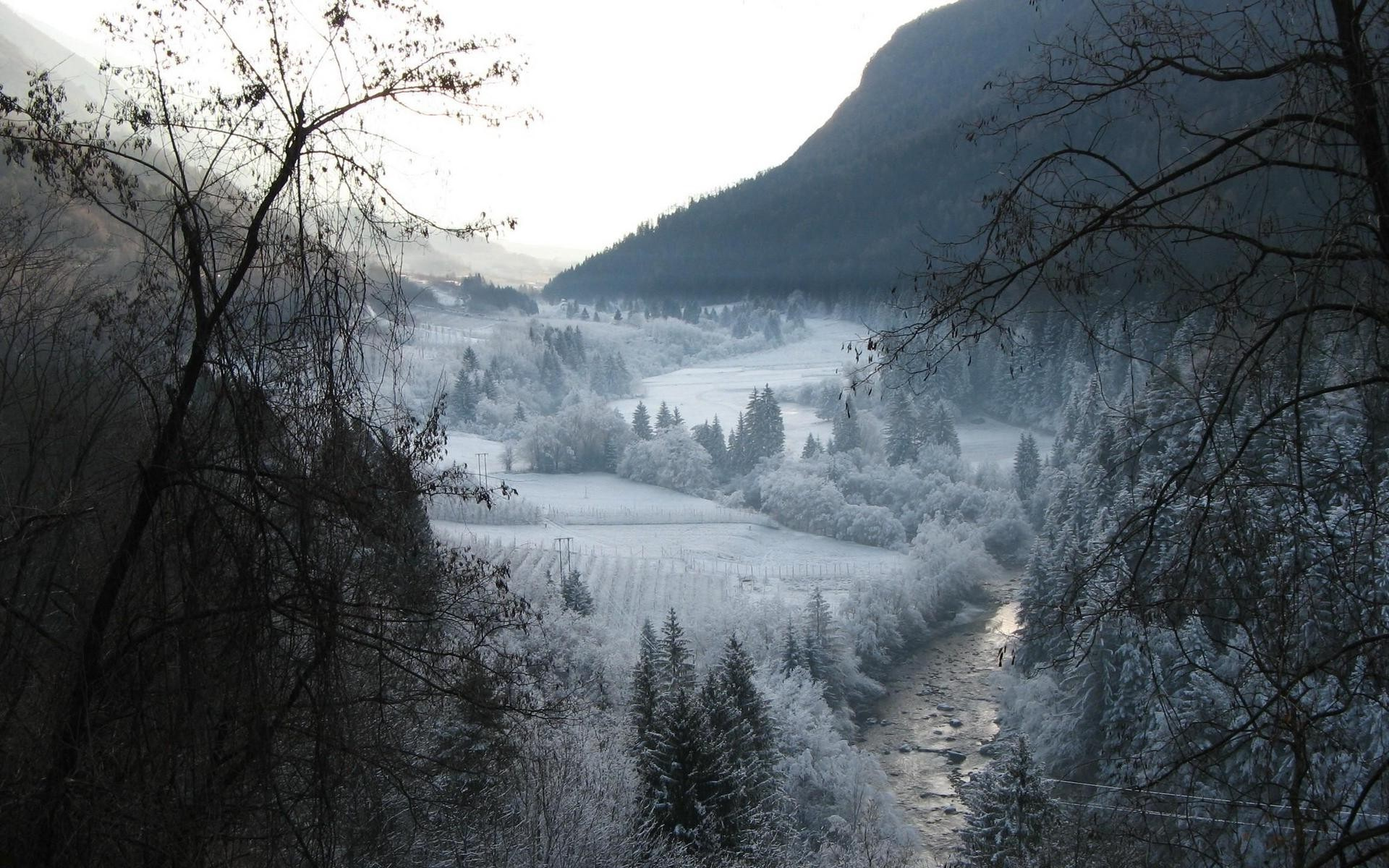 Winter Forest Snowy Forest Wallpapers Wallcoo.net Desktop Background